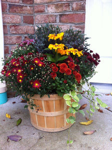Seasonal Mixed Planter