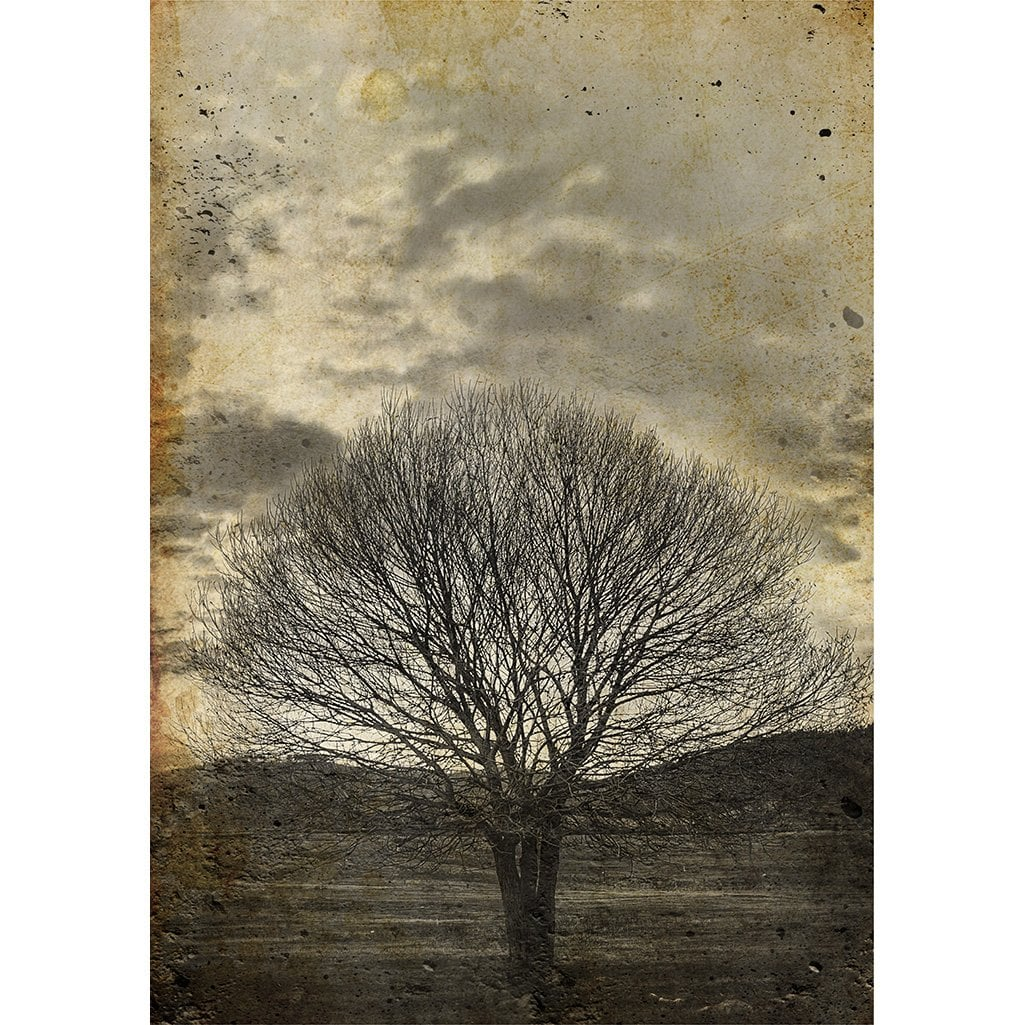 Sepia Tree decoupage paper