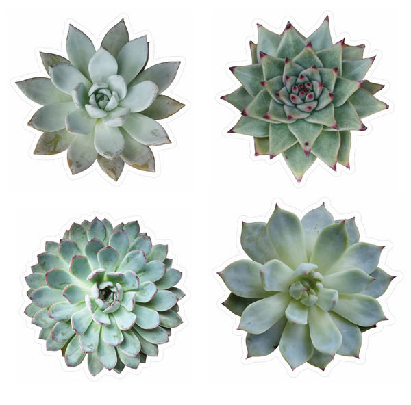 Succulent Cutouts by Schoolgirl Style {U PRINT}