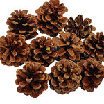 A1 Craft Christmas Decoration Natural Fir Pinecones - Pack of 10
