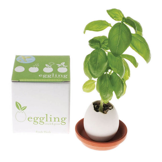 NOTED - Eggling basil scene
