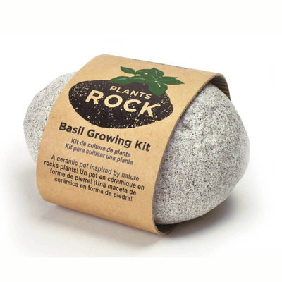 NOTED - Light grey grow your own rock plant