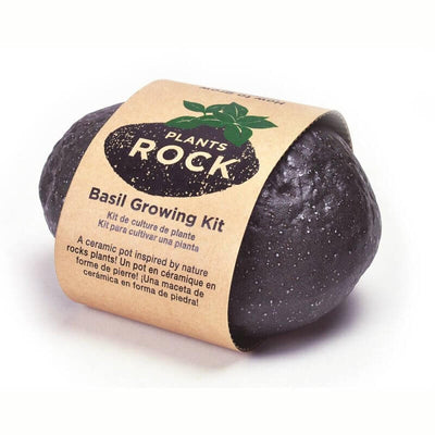 NOTED - Grow your own basil - Rock plant