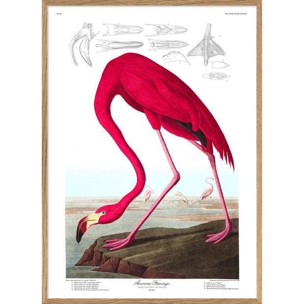 THE DYBDAHL CO - American flamingo - A1 poster