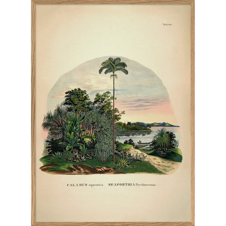 THE DYBDAHL CO - Palm tree poster Calamus - A1