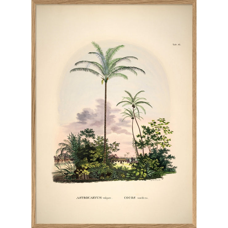 THE DYBDAHL CO - Palm tree poster Astrocaryum - A1