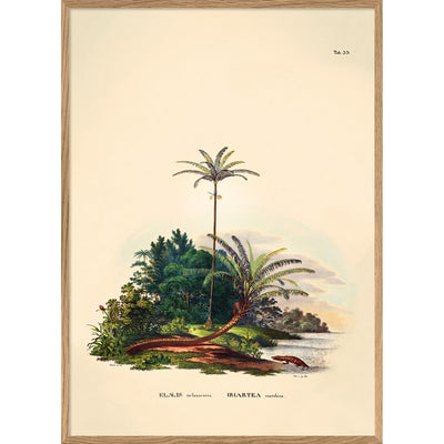 THE DYBDAHL CO - Palm tree poster Elaeis - A2