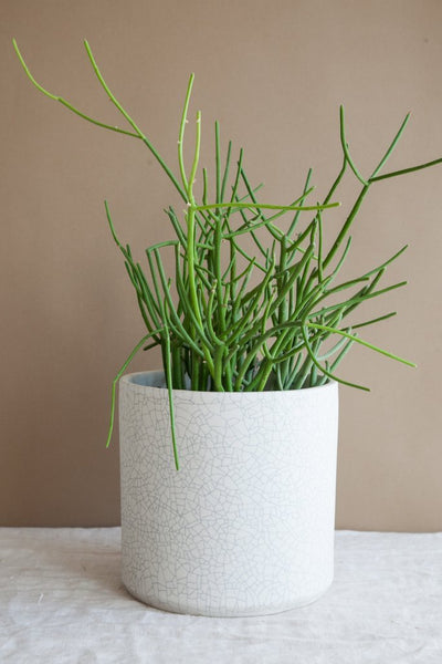 Planter in Crackle