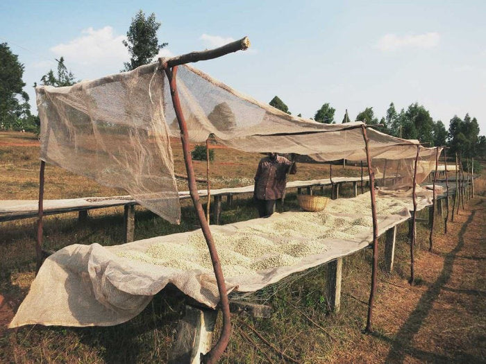 Burundi TEKA Washing Station
