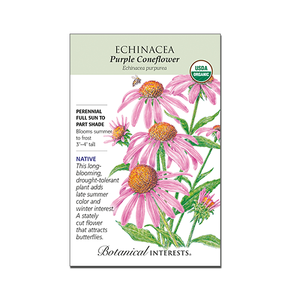 Echinacea 'Purple Coneflower' Organic