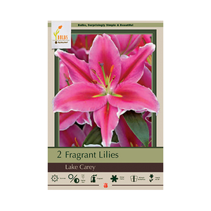 Fragrant Lily 'Lake Carey'
