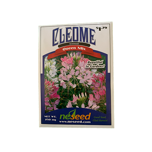 Cleome 'Queen Mix'