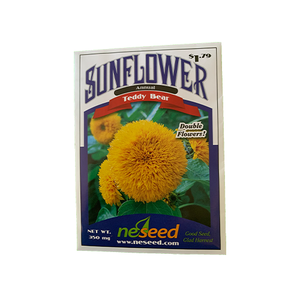 Sunflower 'Teddy Bear'