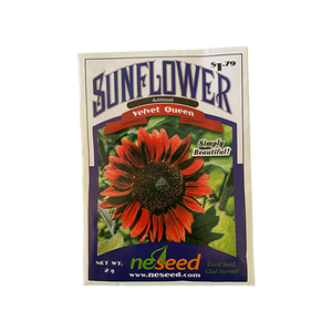 Sunflower 'Velvet Queen'