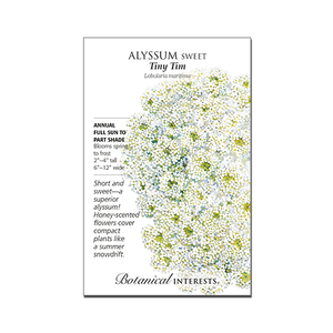Sweet Alyssum 'Tiny Tim'