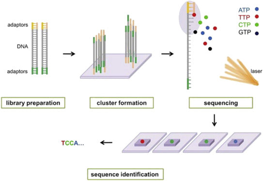 Microarrays vs Next Generation Sequencing