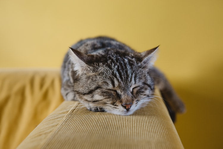 Tabby cat laying on a beige couch with yellow background in the photo