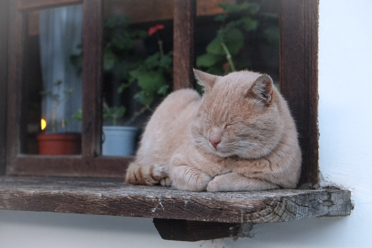 Cute buff cat sleeping on a wooden window