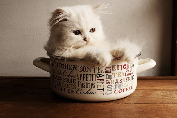 A white persian kitten sitting in a pot