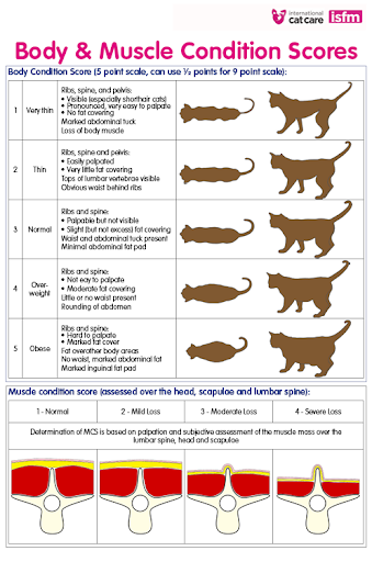 Photo showing Body and Muscle Condition scores of cats to assess the cats nutrition.