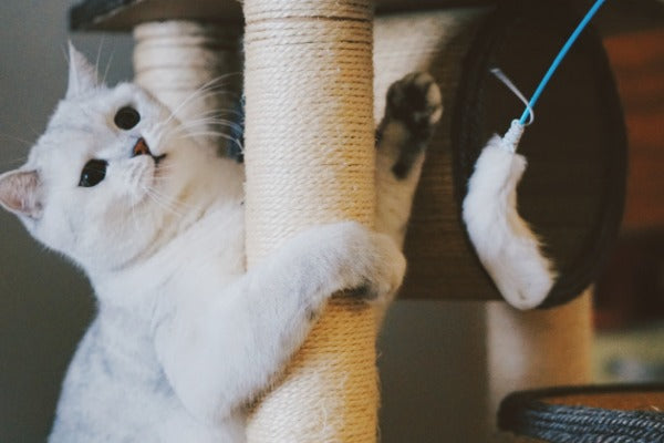 facts about cat dna