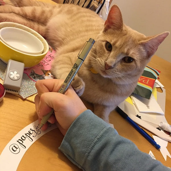 buff tabby cat named charlotte crafting with her owner