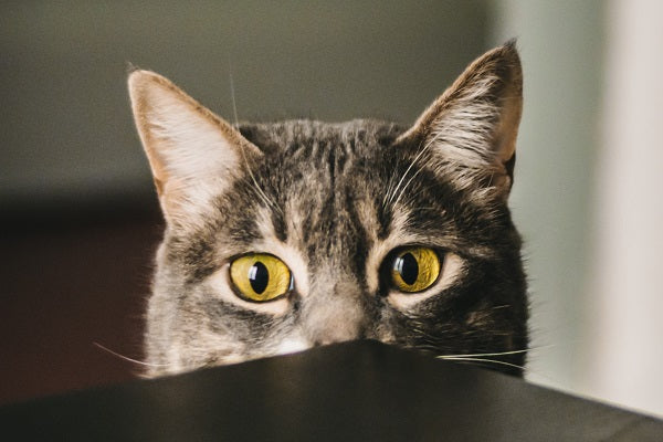 anxiety in cats