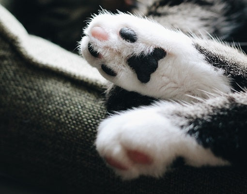 white gloves in cats