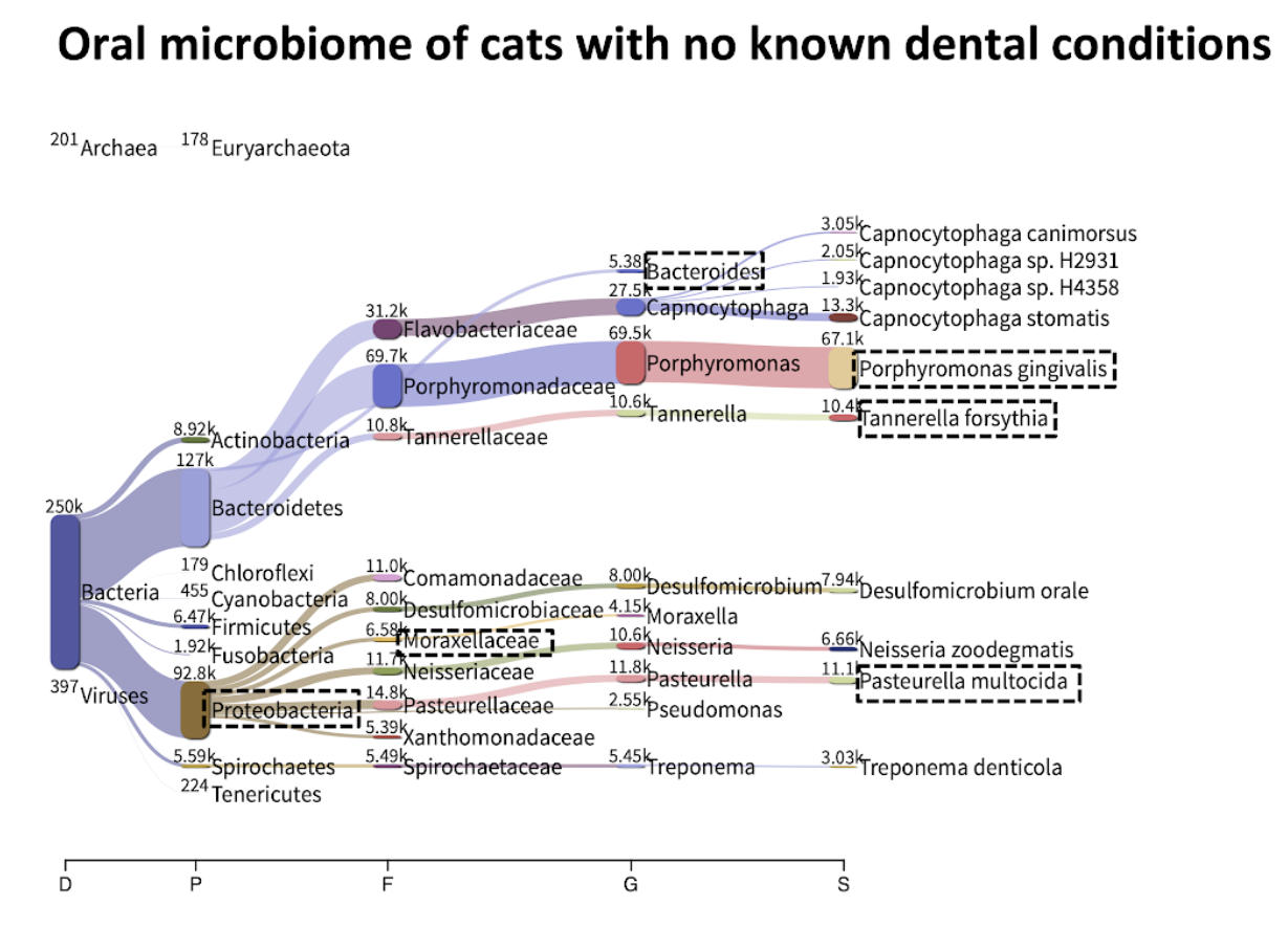 oral microbiome of cats with no known dental conditions