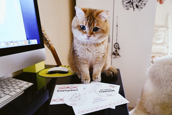Basepaws cat dna test report