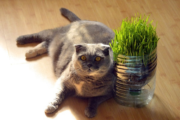 Overweight gray cat with yellow eyes laying next to a plant