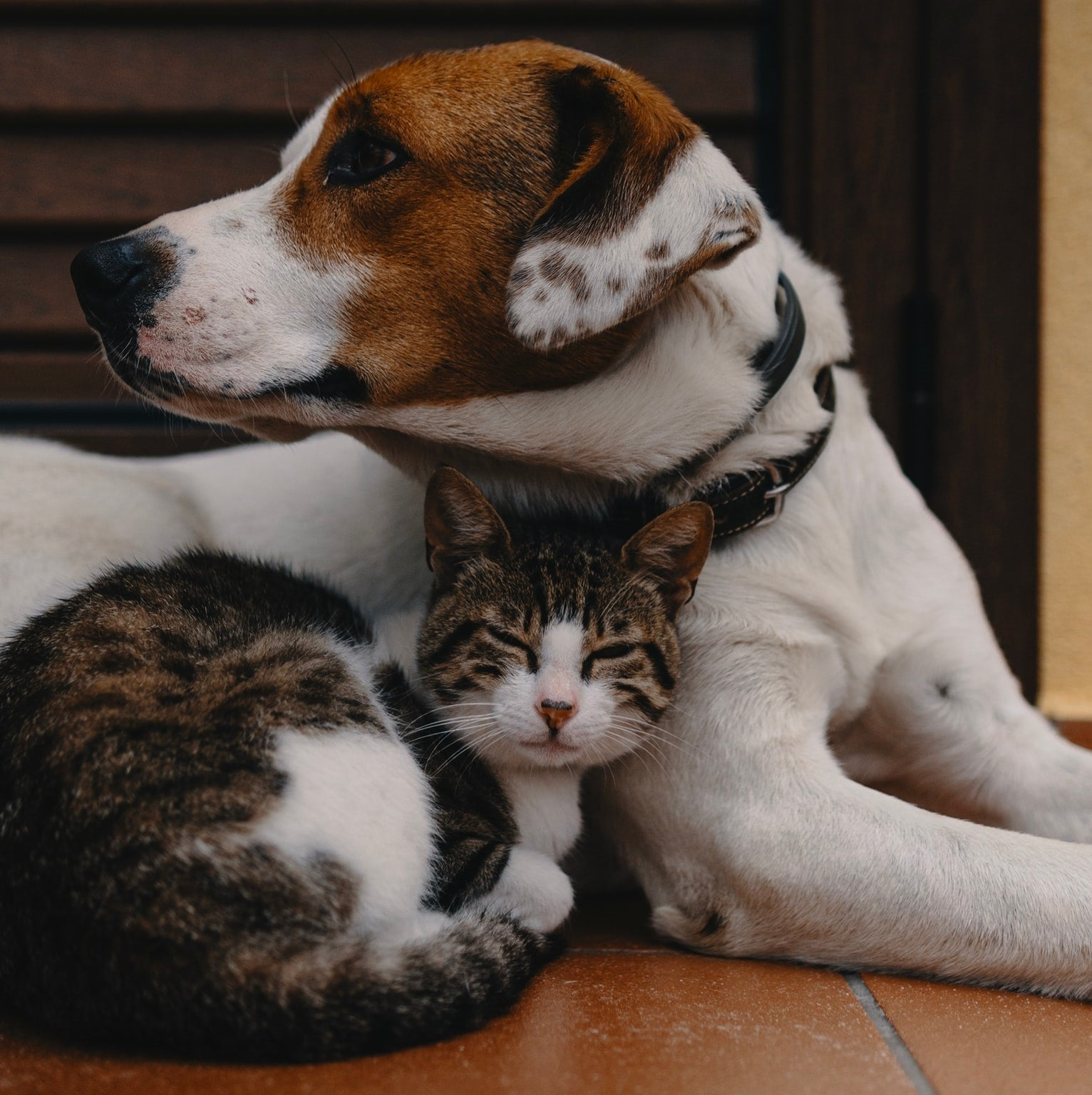 Cute dog and a sleeping cat