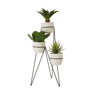 Fiori Set Of 3 Succulents With Metal Stand