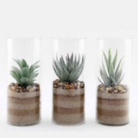 Assorted Sand And Succulent Pots, 20cm