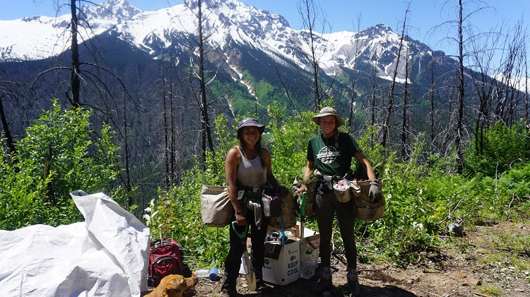 Planting trees in BC