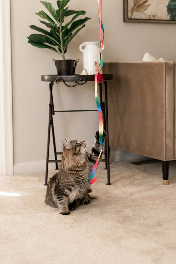 Interactive Cat Toy Collection