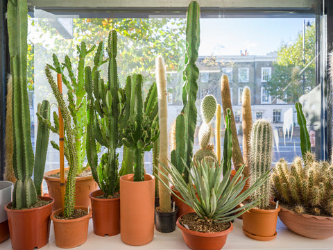 Succulent and cacti plants from black owned business