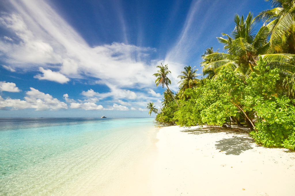 Beach with white sand and palm trees with blue sky