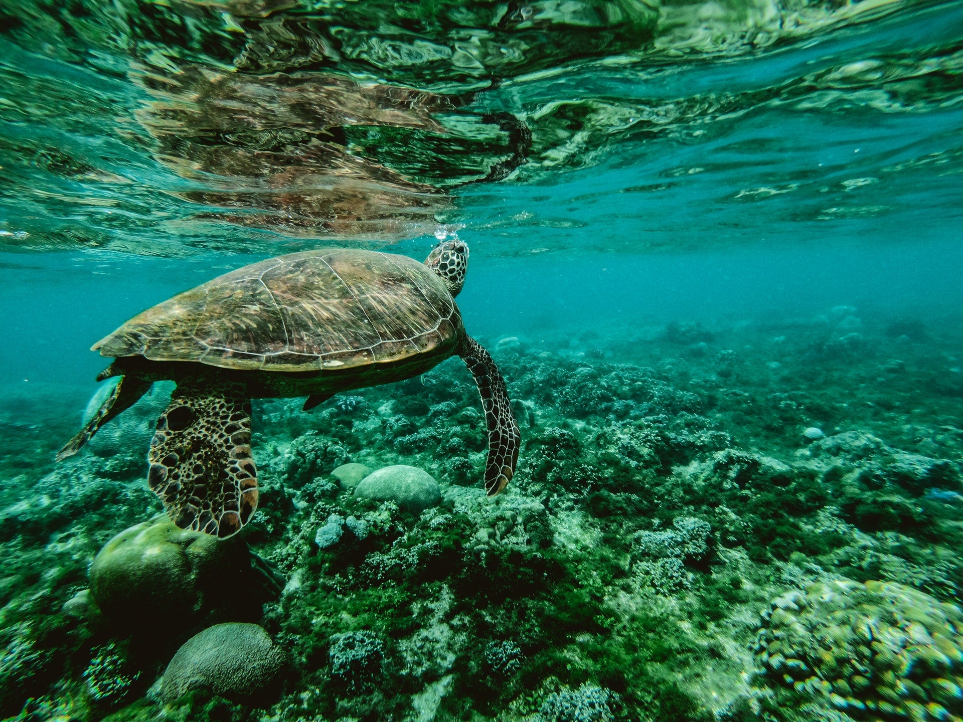 photo of a sea turtle under water