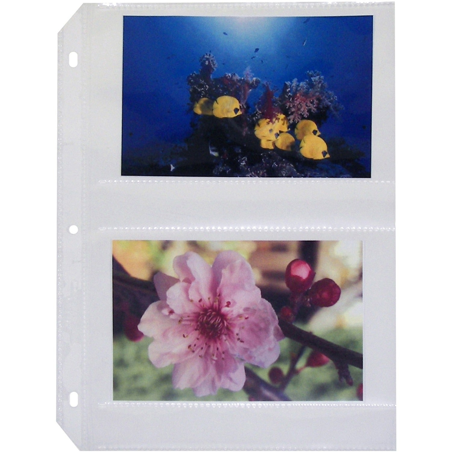 C-Line 35mm Ring Binder Photo Storage Pages - 4 x 6SKU: CLI 52564