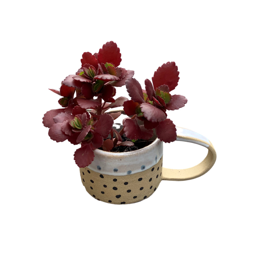 Plant in a Cup II