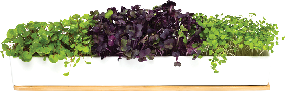 Windowsill Grow Kit - Microgreens