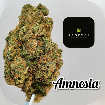 AMNESIA - CBD POT-POURI - Red Eyez - The World Of Hemp