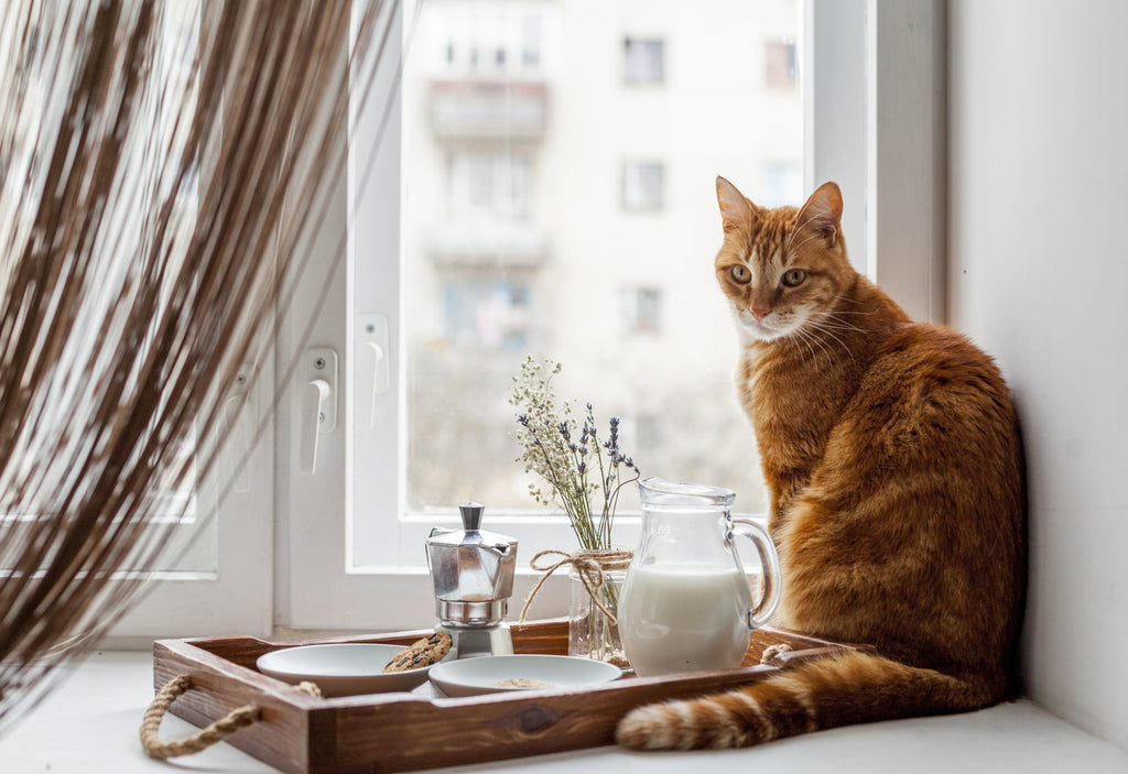 What's The Best Food For Cats? | Paw & Glory