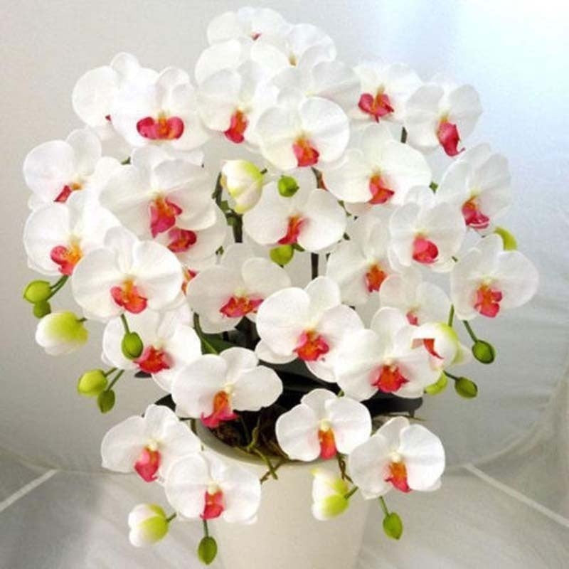100 pcs Orchid  Phalaenopsis Bonsai Perennial Flower Bonsai Home Garden Four Seasons Plants Bonsai Flowers Easy To Grow