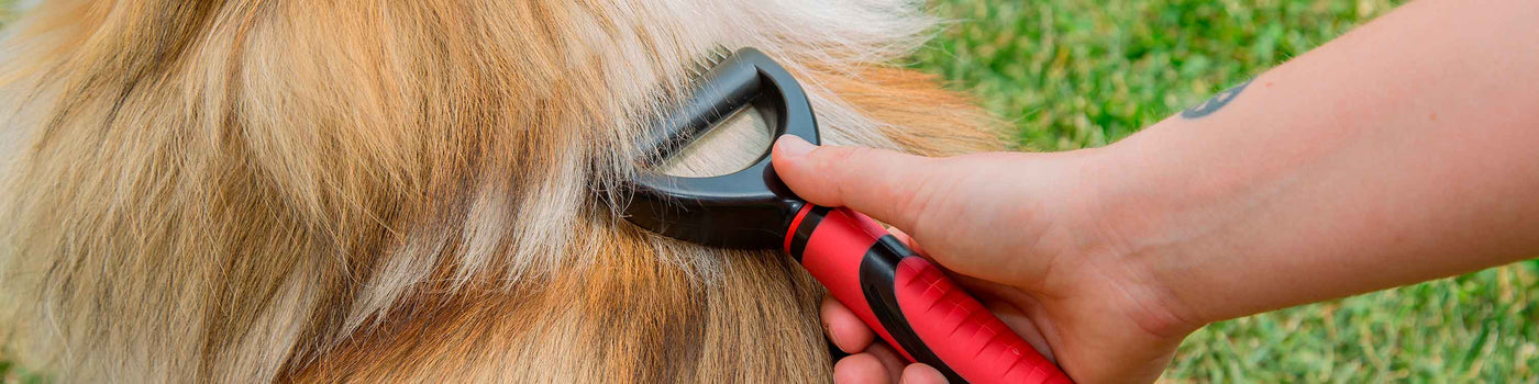 DOG CLIPPERS AND SCISSORS