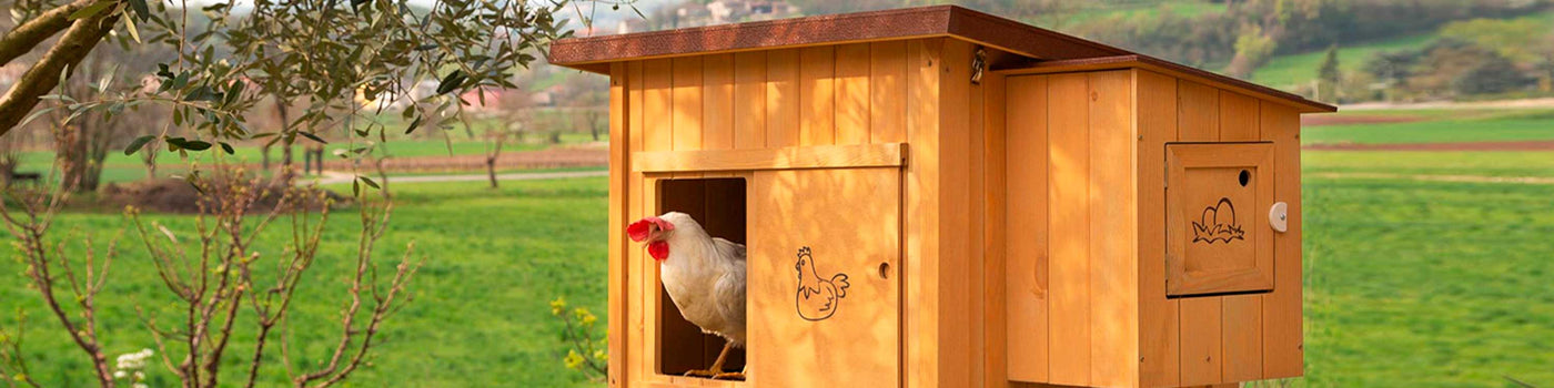 HEN AND CHICKEN HOUSES