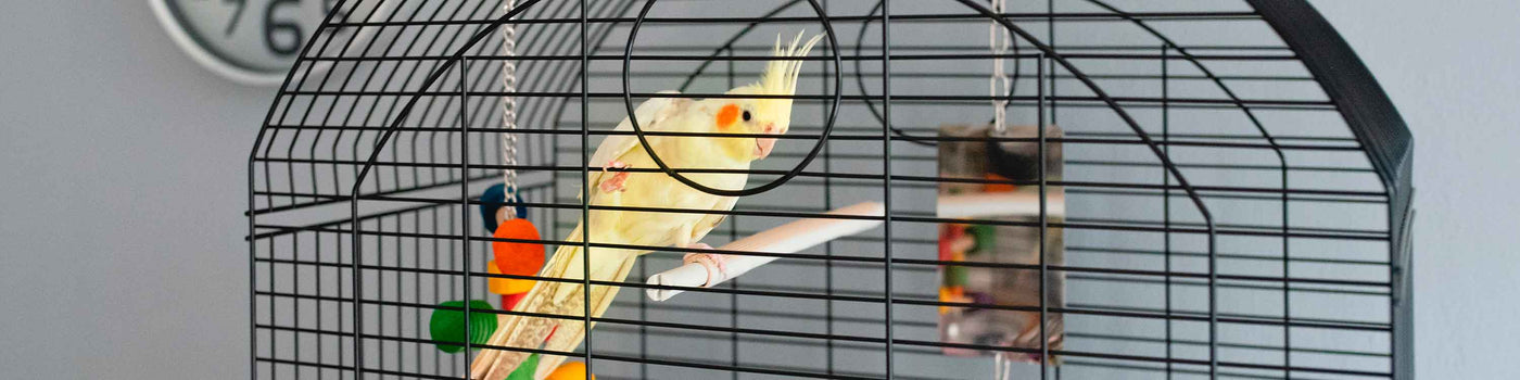PARAKEET AND COCKATIEL CAGES