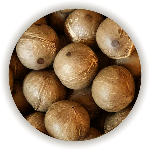 Bite-size coconuts in the shell