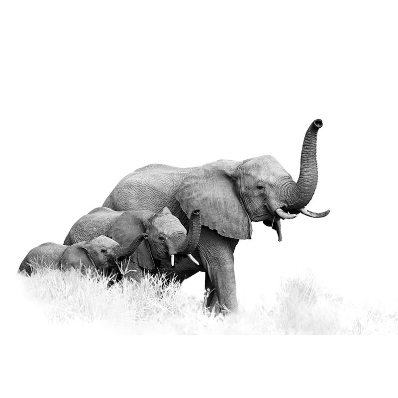 Elephant Family freeshipping - Beautiful Spaces Store